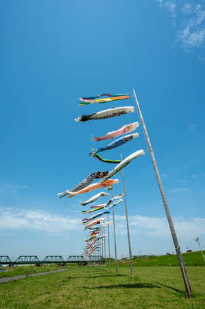 Carp streamer in the blue sky of Onga Riverbed