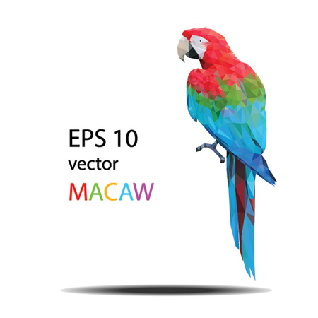 macaw parrot: low poly vector illustration of Macaw Illustration