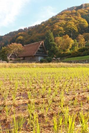 gokayama: Japanese traditional house and rice fields in Gokayama village Toyama Japan