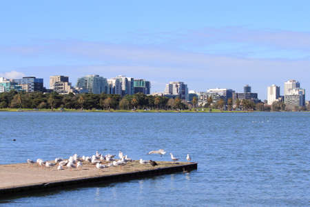 St Kilda apartment buildings view over the Albert park lake and birds resting on the jetty, Albert Park Melbourne Australia