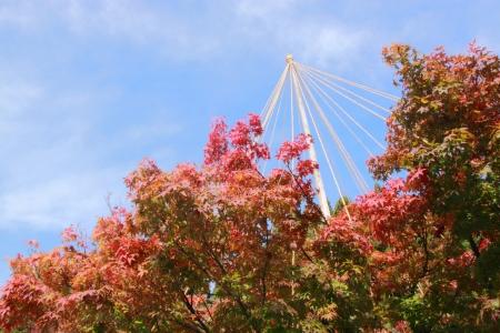gokayama: Autumn leaves and Yukitsuri - snow suspension in Gokayama Japan