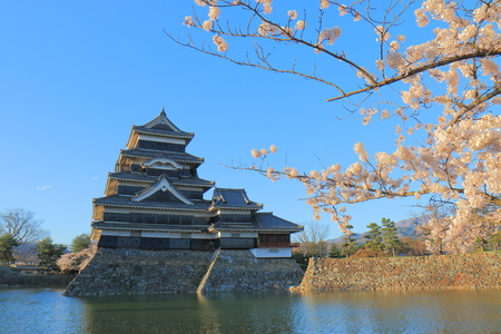 Matsumoto castle and cherry blossom in Nagano Japan