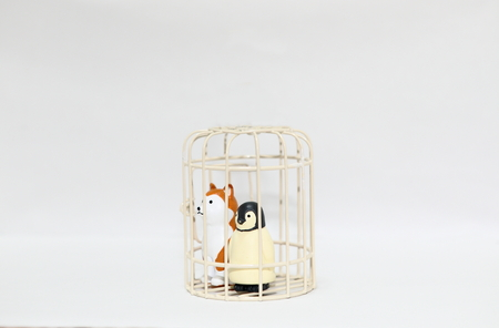 Animal abuse dog and penguin in cage isolated white background