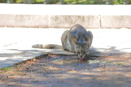 Stray cat drinking water on street