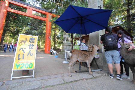 Nara Japan - November 10, 2019: Unidentified people buy deer crackers at Nara park Nara Japan