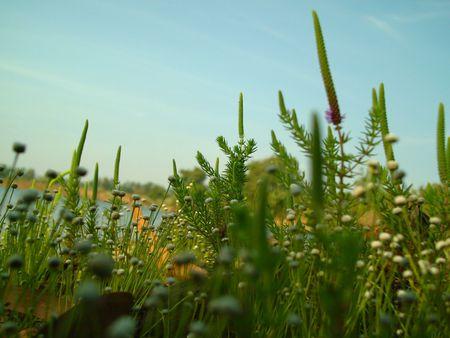 Wild Flowers Stock Photo - 688254