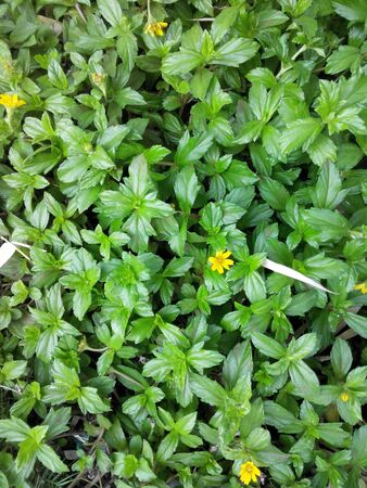 Tiny plants with flowers