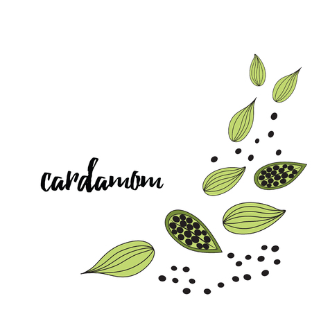 Cardamom vector typography banner with text. Culinary seasoning. Cooking spice made in hand drawn sketch style in green color. Image with cardamom grains on white background. Cute frame.