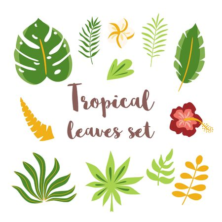 Green tropical leaves set. Hand drawn leaves in cartoon style. Tropical plants decorative graphic elements, hibiscus. Jungle natural collection clip art. Vector illustration.