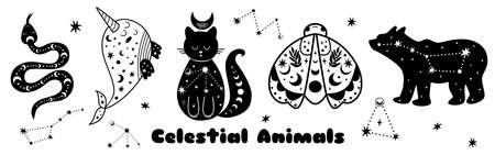 Celestial animals set. Big bear shape moth, cat, whale, snake. Starry elements isolated. Black shapes animals. Wild moon kids collection.  Vector illustration