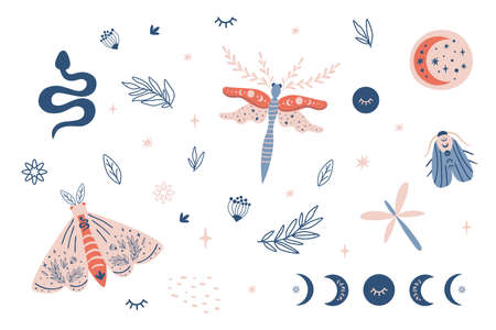 Moon moth clipart, celestial butterfly, moth, moon phases kids set, snake, insects, botany elements