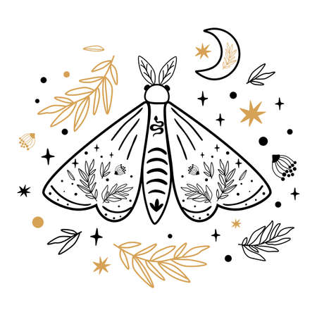 Moth isolated on white. Celestial moth. Hand drawn butterfly, moon, stars, floral branches. Moths tattoo. Vector illustration. Celestial line art decor, poster, card design. Magic celestial element.