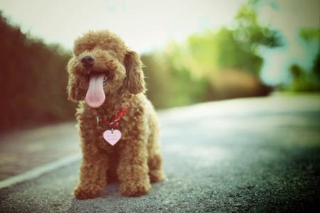 puppy love: Amor es cuando tu perrito te chupa la cara aún después de que los dejó solos todo el día.
