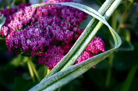 Plant with frost photo