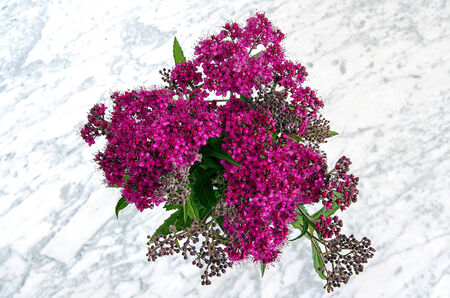 Japanese spirea in black vase on a marble table photo