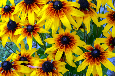 Background from yellow flowers in nice light photo