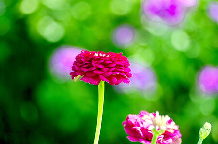Red flower on a green background with purple spots photo