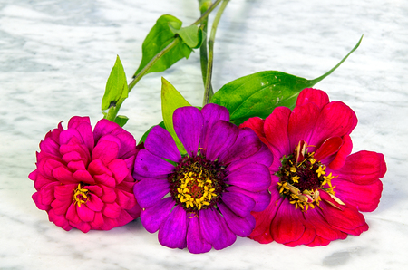 Three colored flowers on a marble table photo