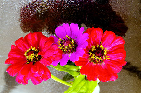 blume: Three colorful flowers on a glass background