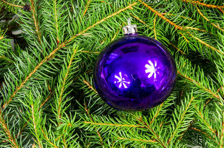 kugel: Blue Christmas balls lying on spruce branches