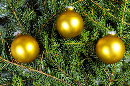 kugel: Three yellow christmas balls on spruce branches