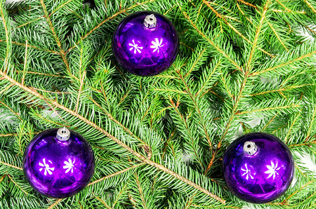 Three purple Christmas balls lying on spruce branches photo