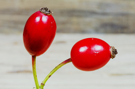 Two red rosehips on a dark background photo