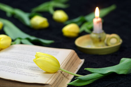 Background with tulips old book and candle photo