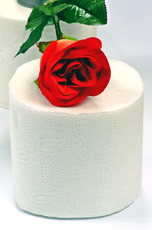 White toilet paper isolated with red rose on a white background photo
