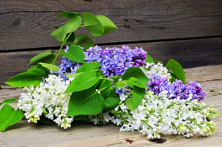 blossoming: Blossoming white lilac on a wooden table Stock Photo