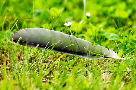 refinement: Birds Feather on a green background in the garden