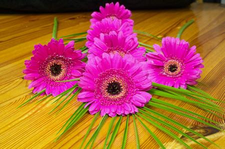 still life flowers: Bouquet of purple gerber on a wooden table, still life, flowers