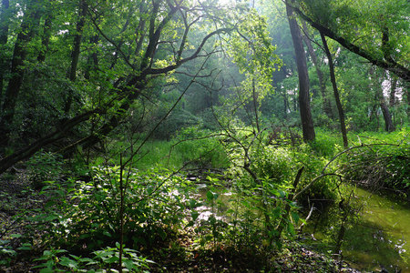 backlite: View of the swamp with trees in the in the backlite, nature, greenery