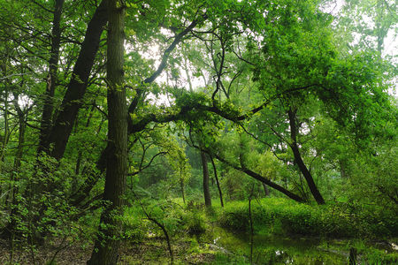 View of the swamp with trees in the in the backlite, nature, greener Stock Photo
