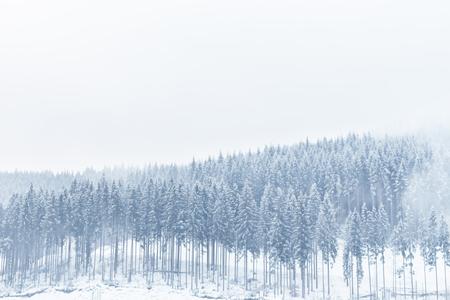 전나무 숲의 겨울보기 눈으로 덮여있다. 스톡 콘텐츠