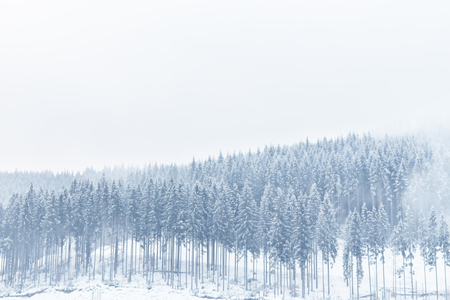 Winter view of a fir forest covered with snow. Banque d'images