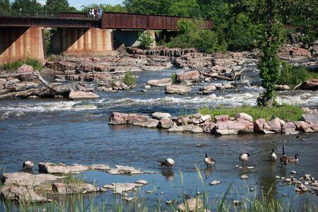 Birds swimming in rocky river Stock Photo - 14036163