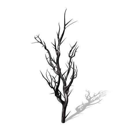 Burs tree Stock Photo - 8603836