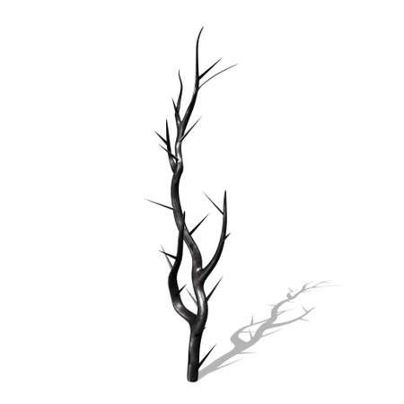 Burs tree branch Stock Photo - 8603834