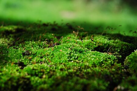 Close-up of green moss Stock Photo - 586242