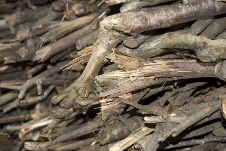 Close shot of small firewood logs photo