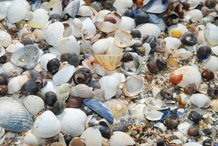 Close shot of sea shells. Suitable for background.
