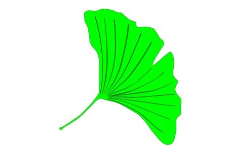 Ginkgo biloba tree green leaf vector graphics