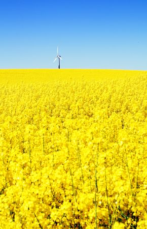 field with wind turbine or mill. rapeseed flowers and energy generator photo