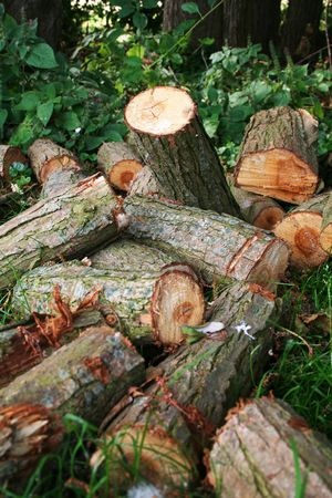 wood heating: wood logs cut and in pile, firewood for stove and heating power
