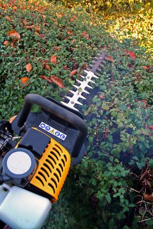 shrubs: hedge cutter trimming. petrol machine for gardening and prune foilage