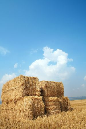 field with bales of hay or straw. danish countryside at harvest time photo