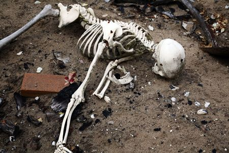 remains: skeleton in dirt. bones and skull from human or dead man