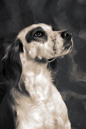 irish setter dog. pet animal portrait Stock Photo - 5770427