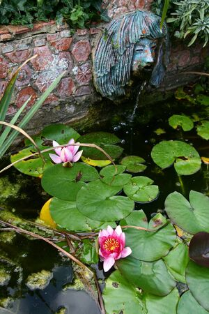 water feature: garden pond with water feature and water lily. small fountain and blossom Stock Photo